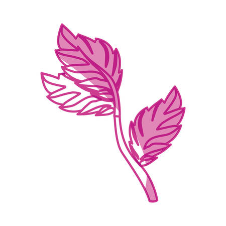 Mint plant leaves icon vector illustration graphic design Illustration