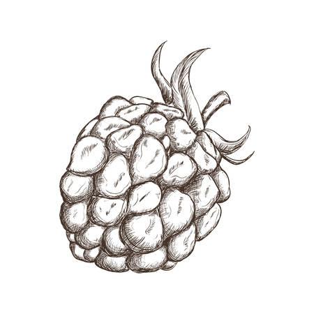 ブラックベリーの果実を描画アイコン ベクトル イラスト グラフィック デザイン
