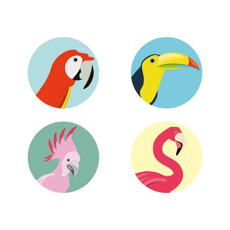 exotic bird heads set icon, vector illustration