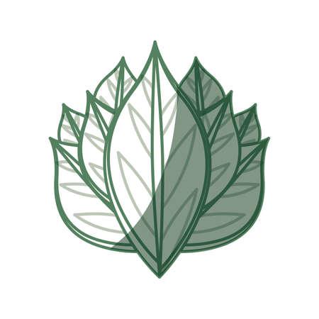 turismo ecologico: Leaves ecology symbol icon vector illustration graphic design