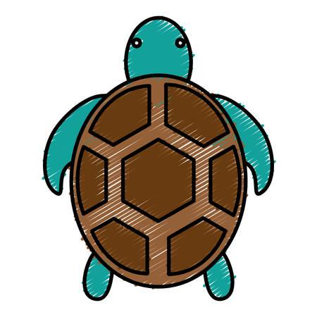tortoise icon over white background vector illustration
