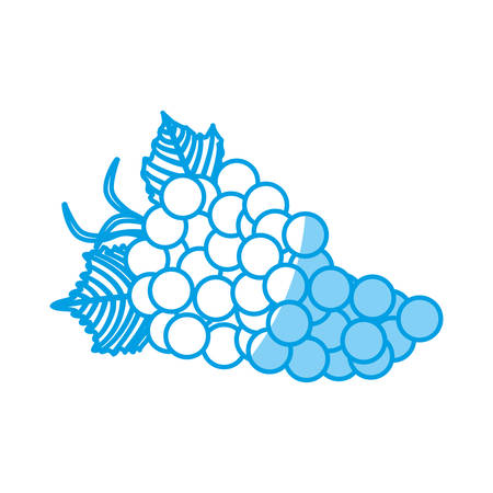 market gardening: Bunch of grapes icon over white background vector illustration Illustration