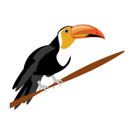 beak pigeon: isolated cute toucan icon vector illustration graphic design