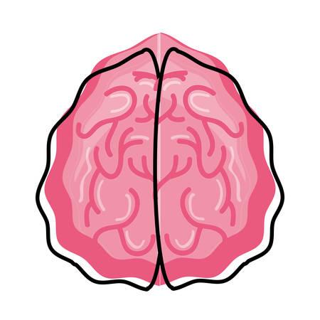 Human brain isolated icon vector illustration graphic design