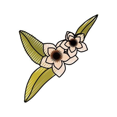 Beautiful flower symbol icon vector illustration graphic design Illustration