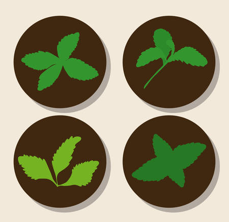 stevia plants over black circles and white background colorful design vector illustration Illustration