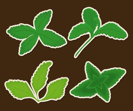 stevia plants over black background colorful design vector illustration
