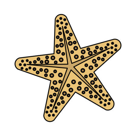 Sea star animal icon vector illustration graphic design