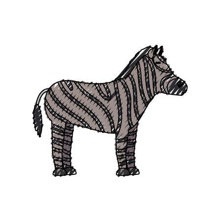 colored  zebra doodle over white background  vector illustration