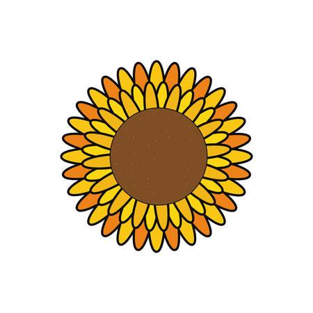 colorul  flower over white background  vector illustration Illustration