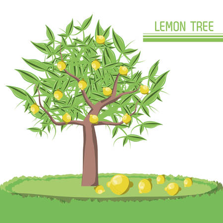 lemon tree icon over white background colorful design vector illustration