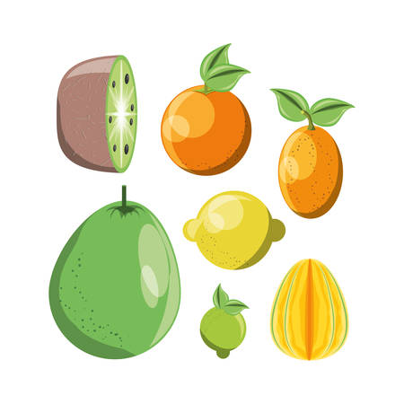 citric fruits icon set over white background vector illustration