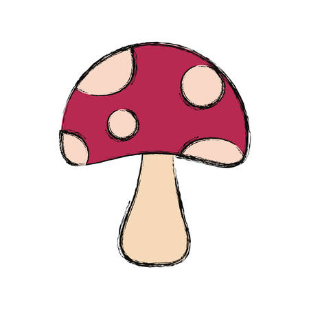 colored fungus over  white  background  vector illustration Illustration