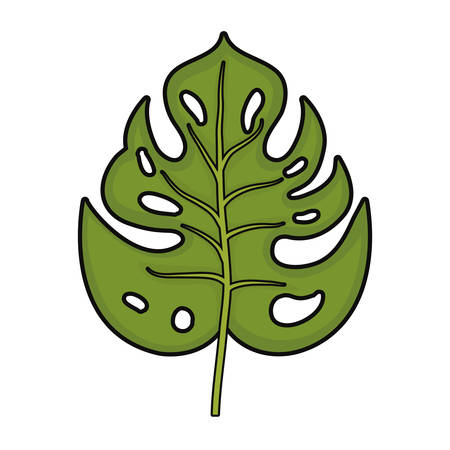 philodendron tropical leaf icon over white background colorful design vector illustration
