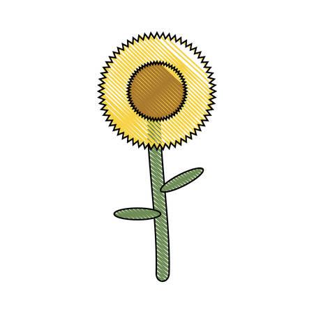 beautiful sunflower icon over white background colorful design vector illustration Illustration