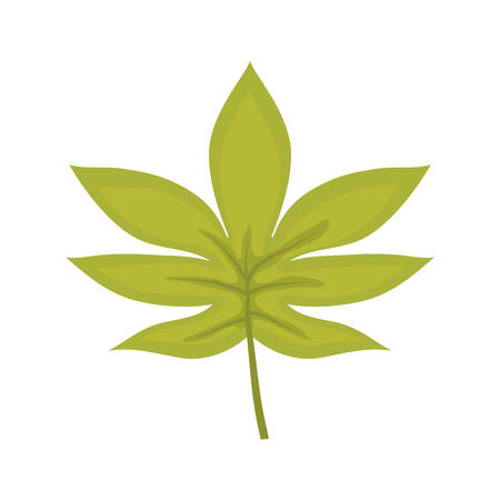 A palmate leaf vector illustration 向量圖像