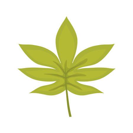 A palmate leaf vector illustration Ilustração