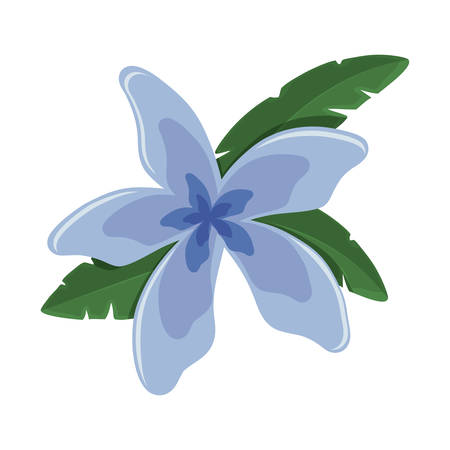 colorful  flower with petals  blue over white background vector illustration