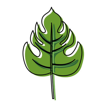 colored  philodendron leaf  over white background  vector illustration