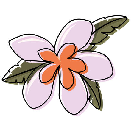 Colored flower with petals plum and coral over white background.