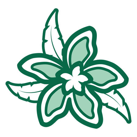 colored  flower green and white  over  white background  vector illustration