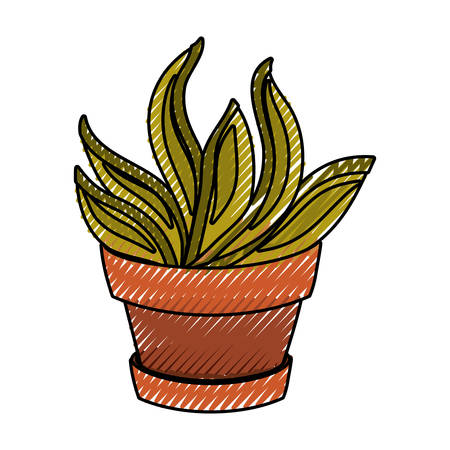 Succulent in potted vector illustration