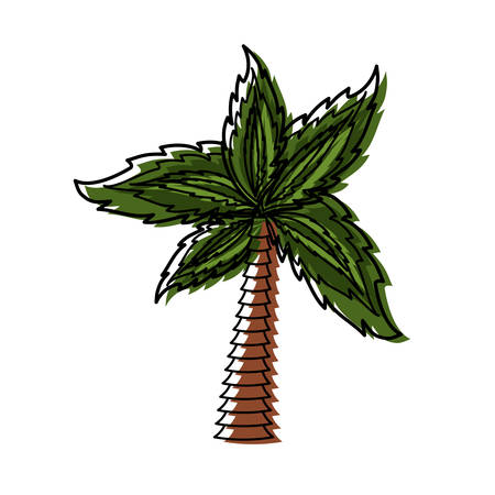 Palm tree symbol icon vector illustration graphic design