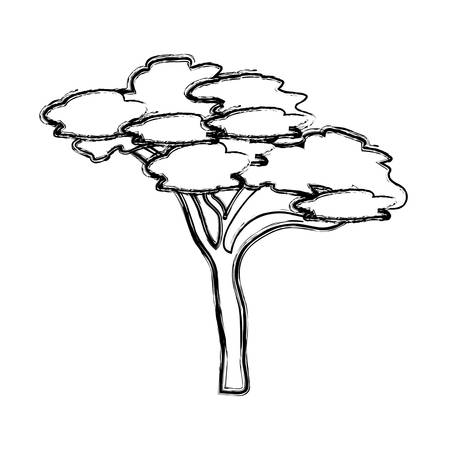 sketch of tree icon over white background vector illustration