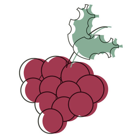 Bunch of grapes icon over white background, colorful design. vector illustration