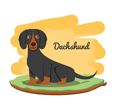 dachshund dog icon over white background, colorful design vector illustration Ilustração