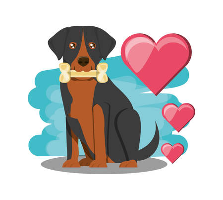 Rottweiler dog with hearts over white background, colorful design vector illustration