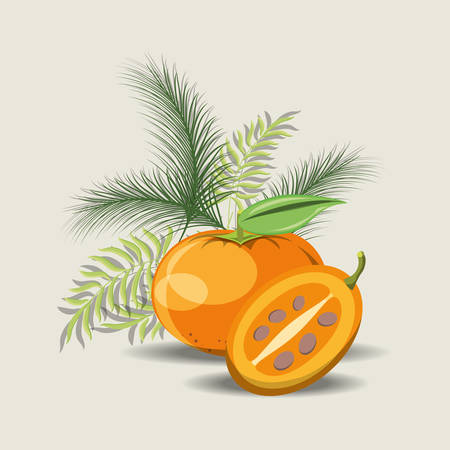 tropical leaves with tree tomato and tangerine over gray background, colorful design. vector illustration