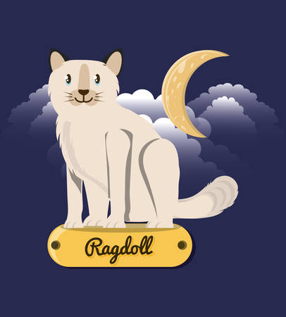 Cat ragdoll under the light of the moon vector illustration design