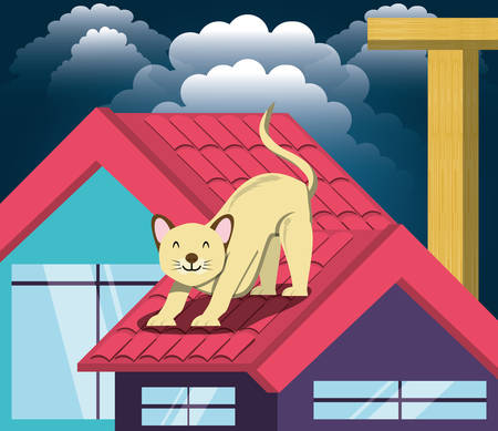 Cat under the light of the moon in the roof vector illustration design Illustration