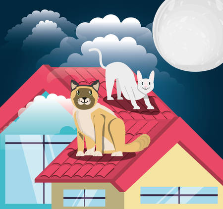 Cats under the light of the moon in the roof vector illustration design Illustration