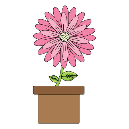 flower plant in a pot over white background, colorful design. vector illustration