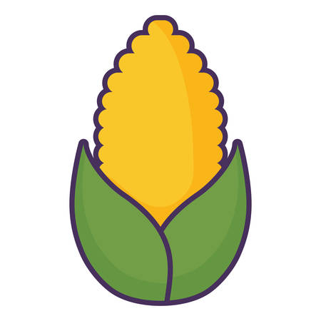 corn vegetable over white background, colorful design. vector illustration Çizim