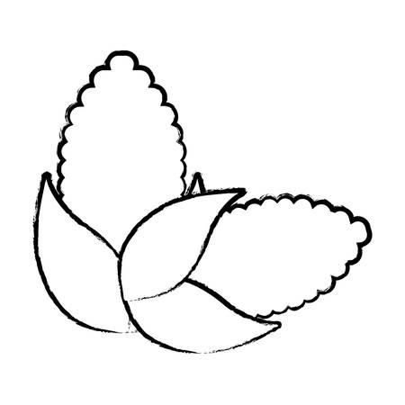 corns vegetables over white background, vector illustration