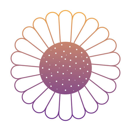 beautiful sunflower icon over white background, vector illustration