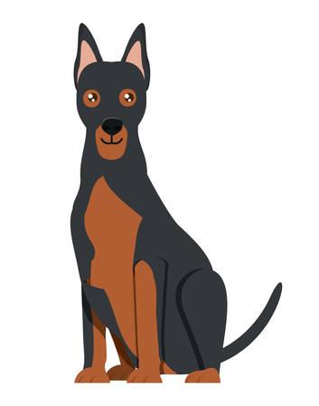 cute doberman dog icon over background, vector illustration