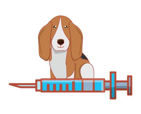 cute basset hound and syringe over white background, vector illustration Vector Illustration