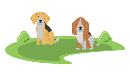 cute beagle and basset hound in the grass over white background, vector illustration