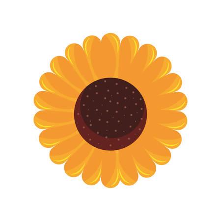 sunflower flower decoration natural flora vector illustration
