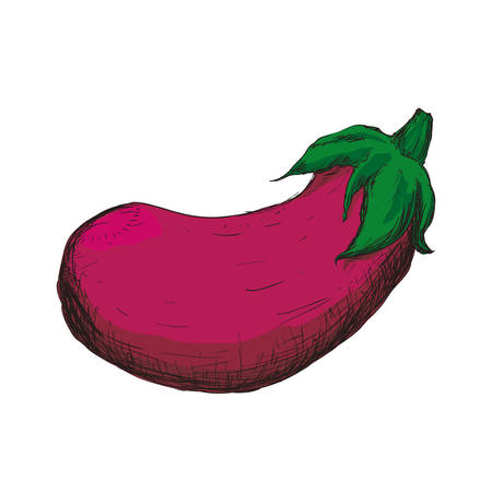 fresh beet vegetarian food vector illustration design
