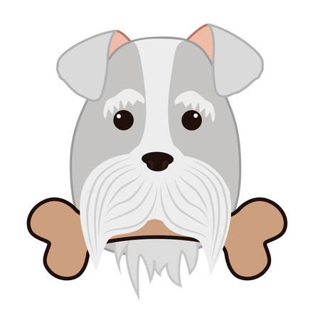 cute miniature schnauzer head with bone vector illustration design