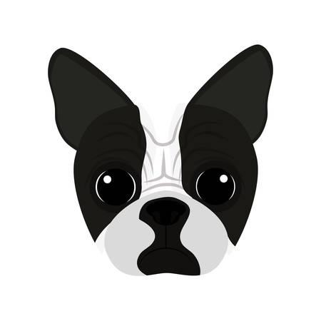 cute boston terrier head vector illustration design