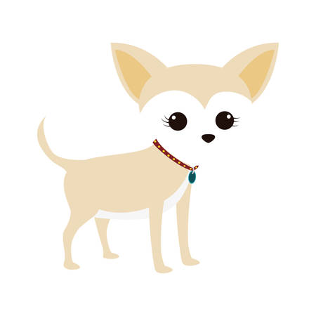 cute miniature chihuahua pet vector illustration design
