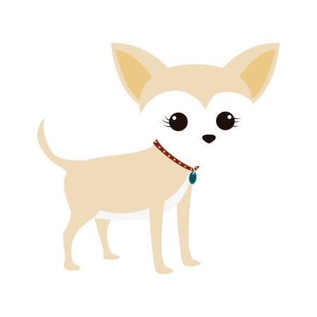 cute miniature chihuahua pet vector illustration design