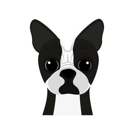 cute boston terrier pet vector illustration design