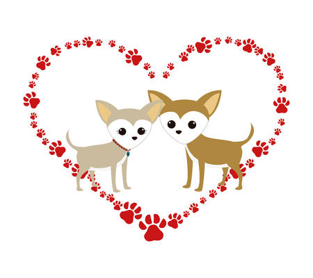 cute miniature chihuahuas couple in heart paws vector illustration design